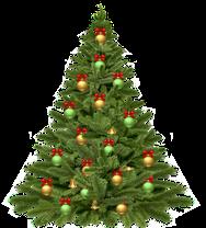 Weihnachtsbaum Braunlage Harz