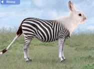 switchzoo : creatief met dieren