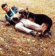 Дрессировка собак в Курске