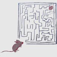 Wie findet eine Ratte den Käse