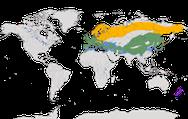 Karte zur Verbreitung der Familie der Braunellen weltweit.