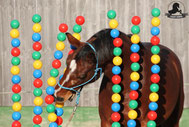 kreative Bodenarbeit, Angst, Pferd, Desensibilisierung, Natural Horsemanship, Freiarbeit, Spaß mit Pferden, Gelassenheitstraining, Antischrecktraining, Antischeutraining, schreckhaft, scheuen, Ronja Rübelmann, Lucky Horse Shop, Bälletor, Bällevorhang