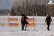 Gelassenheitstraining Pferd, Bodenarbeitsseil, Agility Pferd, Bodenarbeit Kurs, Poolnudelgasse