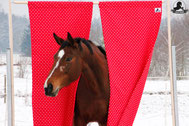 kreative Bodenarbeit, Angst, Pferd, Desensibilisierung, Natural Horsemanship, Freiarbeit, Spaß mit Pferden, Gelassenheitstraining, Antischrecktraining, Antischeutraining, schreckhaft, scheuen, Ronja Rübelmann, Lucky Horse Shop, Lehrgang, Vorhang
