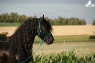 Gelassenheitstraining Pferd, Bodenarbeitsseil, Agility Pferd, Bodenarbeit Kurs., Knotenhalfter