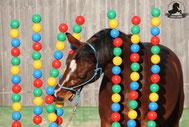 Gelassenheitstraining Pferd, Bodenarbeit, Bodenarbeitsseil, Agility Pferd, Bodenarbeit Kurs, Bälletor