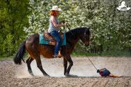 Flatterball, Klappersack, Gelassenheitstraining Pferd, Bodenarbeitsseil, Agility Pferd, Bodenarbeit Kurs