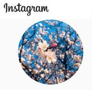 Instagram『ももいろの道』