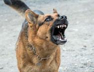 Si vous êtes agressif, votre chien le sera aussi