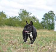 Dressage de chiens : est-ce vraiment utile ?