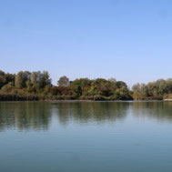 Natursee Senden Wullenstetten Baggersee See Natur Kies Schilf Bäume Herbst Biotop Naturschutz LBV Neu-Ulm