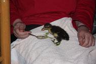 Friederike war zu spät geschlüpft. Ihre Mama und Geschwister waren schon aus dem Nest geflüchtet.
