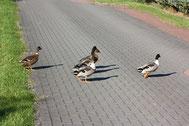 Obwohl sich alle den wild lebenden Enten angeschlossen haben, kommen auch die Kinder regelmäßig vorbei.