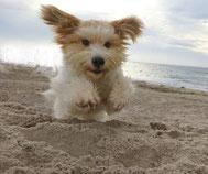 Hundebetreuung - individuell und privat - ZeitforMi