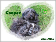Cooper alias Mike