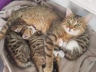 Kitten barfen