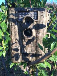 El camuflage marrón no siempre es adecuado en zonas boscosas