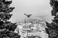 """""""Volando Su Trieste"""",  Scorcio di Trieste vista dall'alto del Parco della Rimembranza  ~ """"Premio Internazionale Ambasciatore d'Arte""""  indetto da Spoleto Arte"""