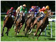Pferdesport, Pferderennen