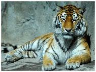 Zoo Zürich, Tierwelt, Tiere
