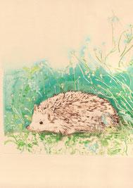 Takako Hirano - gravure réhaussée d'aquarelle - le hérisson