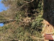 中岡撮影木の画像