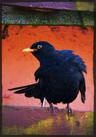 Hoffnung ist ein schmutziger Vogel. (Rowek)