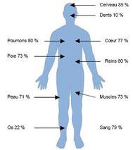 proportion d'eau niveau poids photo bua.mabulle.com
