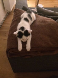 unser Katzenbaby Coco, Relaxing auf dem Sofa :-)