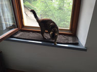 Katze Pink der Neuzugang noch krank - gute Besserung du kleiner Schatz