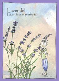 Kräuterkarte, Wildkräuter, Aquarellzeichnung_Lavendel_Lavendula angustifolia,  Elfen, Gnome Feen