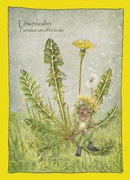Kräuterkarte, Wildkräuter, Aquarellzeichnung_Löwenzahn_Taraxacum officinale,  Elfen, Gnome Feen