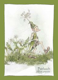 Kräuterkarte, Wildkräuterkarte_Bärlauch_Allium ursinum,  Elfen, Gnome Feen