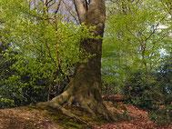 frisches Wald.grün