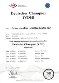 Aimys Champion Urkunde