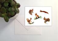N°13 écureuils