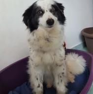 Pflegehund Rumänien