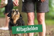 Hund und Herrchen bei einer Übung ohne Leine zur Aufmerksamkeit des Hundes