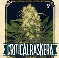 semillas marihuana tarragona