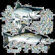 t shirt pêcheur saumon