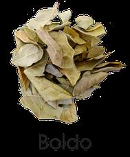 Boldo, infusión de boldo, Hiebas aromáticas, Hierbas para infusión, Almería, Tienda de té en Almería, Tea Salud,