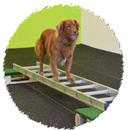 Degility, Hund, Gerätetraining, Körperwahrnehmung, Kurs