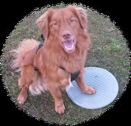 Fitnesstraining, Hund, Gymnastik, Gleichgewicht, Koordination, Körperwarnehmung, Hundetraining