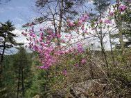 5月15日の花