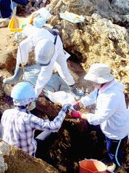 約2万年前の人骨が出土した発掘調査現場。発掘した人骨を採取する調査員=11月30日、新石垣空港内の白保竿根田原洞穴遺跡