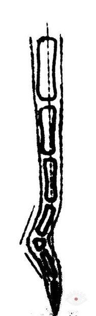 Схема изгиба хвоста
