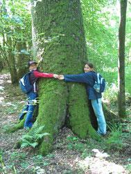 Baum umarmen - Dr. Christian Stierstorfer - LBV Bildarchiv