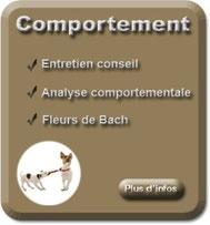 Comportement, entretien conseil, analyse comportementale et fleurs de Bach
