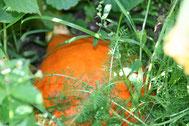 Kürbis im Phantastischen Garten der Kleinen Wunder in Ottersberg