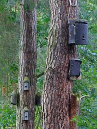Fledermauskästen für Baumaufhängung